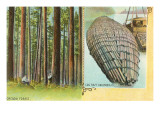 Forest and Log Raft, Columbia River, Oregon Posters