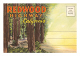 Postcard Folder, Redwood Highway, California Print
