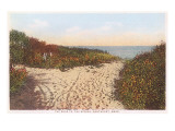 Road to the Spring, Nantucket, Massachusetts Poster