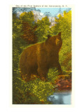 Bear in the Adirondacks, New York Prints