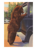 Bear at Car Window Print