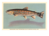 Eastern Brook Trout Prints