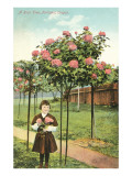 Girl Standing by Rose Trees, Portland, Oregon Prints