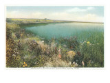 Pond and Wildflowers, Nantucket, Massachusetts Exklusivt gicléetryck