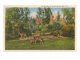 Deer, Adirondack Mountains, New York Posters