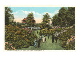 Rhododendrons, Highland Park, Rochester, New York Print