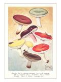 Various Mushrooms Prints