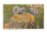 Squirrel, Catskills, New York Poster