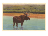 Bull Moose, Yellowstone Park Posters