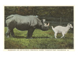Rhino and Goat, Zoo, Philadelphia, Pennsylvania Prints