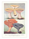 Various Mushrooms Poster
