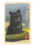 Fala, Roosevelt's Scottie Dog Posters