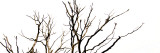 Branches on White Background Photographic Print by Clive Nolan