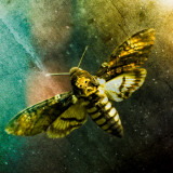 Moth Moments Photographic Print by Clive Nolan