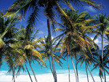 Palm Trees and Beach, Barbados, Caribeean Photographic Print by Peter Adams