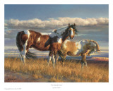 The Painted Desert Poster von Nancy Glazier