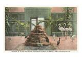 Flying Bird House, Zoo, Philadelphia, Pennsylvania Art