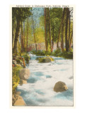 Ashland Creek, Chautauqua Park, Ashland, Oregon Posters
