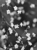 Innodrive Fotografie-Druck von Jim Crotty
