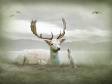The White Stag Photographic Print by Lynne Davies