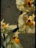 Bowman Photographic Print by Cristina Carra Caso