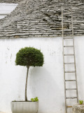 Ladder and Potted Tree, Trulli Houses, Alberobello, Puglia, Italy Photographic Print by Walter Bibikow