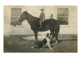 Farmboy with Cat on Horse and Dog Posters