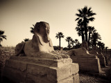 Egypt, Luxor, Luxor Temple, Avenue of Sphinxes Photographic Print by Michele Falzone