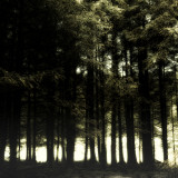 The Forest Photographic Print by Clive Nolan