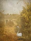 Buzzbird Photographic Print by Lynne Davies