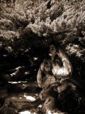 Dryad II Photographic Print by Lydia Marano