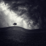 Alone Again Photographic Print by Luis Beltran