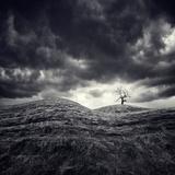 So Lonely Fotografie-Druck von Luis Beltran