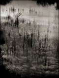 Reeds Photographic Print by Lydia Marano