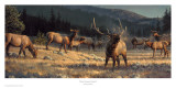 Rocky Mountain Meadow Kunstdrucke von Nancy Glazier