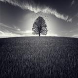 Se Va La Vida Fotografisk trykk av Luis Beltran