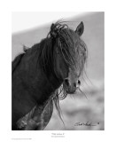 Wild Stallion II Prints by Claude Steelman