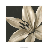 Classical Blooms III Limited Edition by Ethan Harper