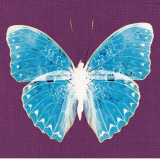 Purple Pop Butterfly Prints by Christine Caldwell