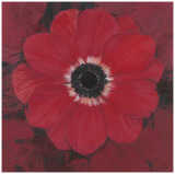 Single Red Anemone Print by  Ivo