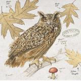 Great Horned Owl Print by Chad Barrett
