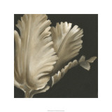 Classical Blooms I Limited Edition by Ethan Harper