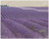 Lavender On Linen I Prints by Bret Staehling