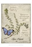 Herbs & Butterflies III Print by Kate Ward Thacker