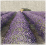 Lavender Field Prints by Bret Staehling