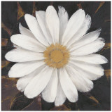 Magical White Daisy Posters by  Ivo