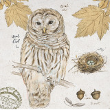 Ural Owl Prints by Chad Barrett