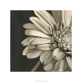 Classical Blooms IV Limited Edition by Ethan Harper