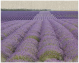 Lavender On Linen II Art by Bret Staehling