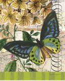 Bountiful Butterfly II Prints by Walter Robertson